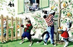 Artista assinado Alfred Mainzer Comic vestida Gatos Picking peras 4727 Pc Da Turquia in Colecionáveis, Cartões postais, Assinados pelo artista | eBay