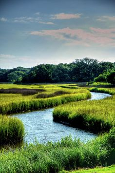 I love the saltwater marsh ecosystem.
