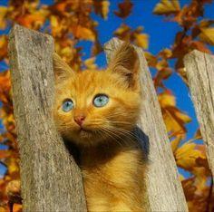 Imagen de cat, kitten, and autumn