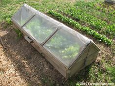 amish1 DIY build an amish cold frame in vegetables with pallet greenhouse amish