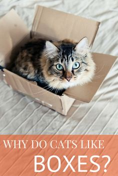 Those empty boxes may be trash to you, but your cat can't get enough of them. What's up with Fluffy's affinity for cardboard castles?