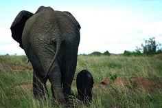 Explore Kenya on the world sites! Enjoy what Kenyan visitors are doing in Kenya. Countries Of The World, Kenya, Safari, National Parks, Elephant, Country, Animals, Image, Elephants