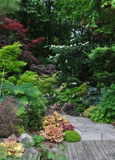 Throughout the garden, and especially along its outer perimeter, mature trees cast pockets of shade and part shade.