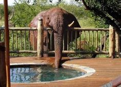 PetsLady's Pick: Funny Elephant Of The Day ... see more at PetsLady.com ... The FUN site for Animal Lovers