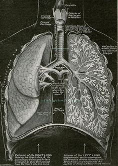 Antique Medical Print Here Comes Every by VintageInclination, $21.50