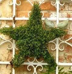 mini garden estrela