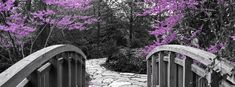 black white and pink photography | Black and White Bridge with Pink Cherry Blossoms Facebook Cover ...