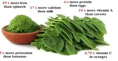 Moringa and fertility: Does it work?   Moringa and fertility: Does it work?  What are Moringa leaf and Moringa seed health benefits? What is it known about Moringa and fertility?  It is little known about Moringa Oleifera or Moringa tree which grows in arid areas on sandy soils. Its country of origin is India a place where are the foothills of Himalayas. It is also found in Thailand Africa Taiwan and Philippines. According to the researches Moringa leaf contains vitamins minerals amino acids…