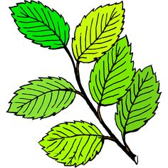 Colour version of the branch, green spring or summer look Leave In, Trees To Plant, Plant Leaves, Leaves Vector, Romance, Clip Art, Png Photo, Nature Plants, Clipart Images