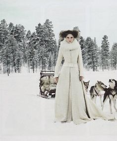 with huskies and a sled