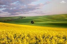 Moravian fields by ppardala via http://ift.tt/1T5XeWo