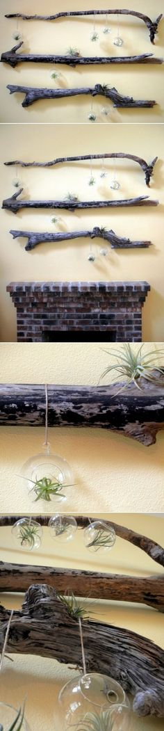 DIY Driftwood And Terrarium Wall Decorations