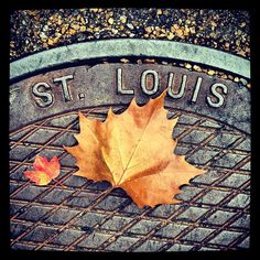 St. Louis' sewers in Fall Saint Charles, Saint James, Stl Arch, St Louis Baseball, St Louis Mo, Best Cities, Great Places, Cardinals, Mississippi