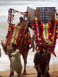 Pakistan, Camel, Decorated