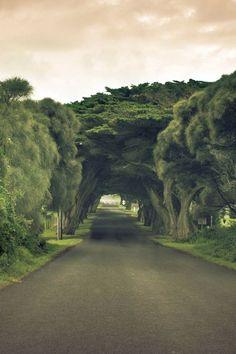 akihmbo:  bonitavista:Australiaphoto via jody