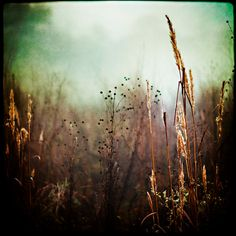 """Foggy Landscape Print, """"Arboretum,"""" Nature photo  by Slight Clutter via Etsy."""