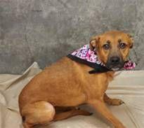 *Urgent! *DAISY has 7 Days Left to Live!  (Greenville SC) http://www.dogsindanger.com/dog.jsp?did=1357866839463