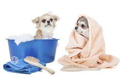 Homemade Dog Conditioner | Cuteness.com