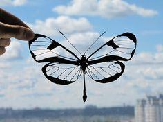 Photo of Glasswinged Butterfly Handmade Original Papercut Gift: Hand-Cut Paper Art Silhouette