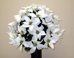 white poinsettias for a winter wedding :)