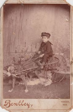 Cute Vintage Cabinet Photo/Boy Dog Mutt Cart Mixed Breed Pet Pender NE RARE LOOK