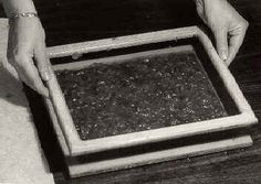 Paper making from plant material
