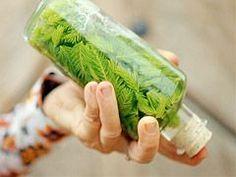 Tinktura z mladých smrkových výhonků — Recepty — Kouzelné bylinky — Česká televize