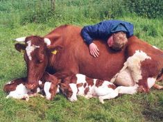 Cow, calves and farm boy. Farm Animals, Animals And Pets, Cute Animals, Beautiful Creatures, Animals Beautiful, Beautiful Farm, Baby Cows, Cute Cows, Livestock
