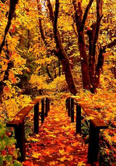 Forest Bridge, Toketee Falls, Oregon...                                                                                                                                                                                 More