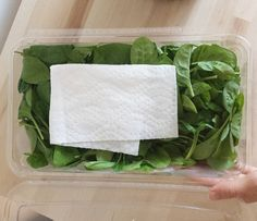 "Putting a paper towel in with your lettuce soaks the moisture so that it will stay crispier for a longer period of time. | 23 Hacks From Instagram That'll Make You Say ""That's Genius"""
