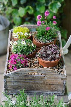 The best spring pots to brighten up your garden Cottage Garden Design, Love Garden, Dream Garden, Small Cottage Garden Ideas, Big Garden, Alpine Garden, Alpine Plants, Rockery Garden, Garden Pots