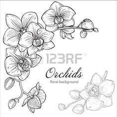 moth orchid coloring pages - photo#13