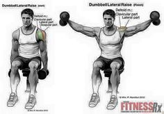 Yoga For Beginners : – Image : – Description Fill Out Your Shoulders – With Seated Dumbbell Lateral Raises Sharing is power – Don't forget to share ! Deltoid Workout, Dumbbell Workout, Training Programs, Strength Training, Shoulder Workouts For Men, Shoulder Routine, Traps Workout, Shoulder Training, Training