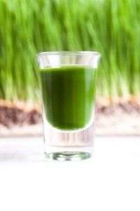 Wheatgrass Reverse Gray Hair Back to Its Natural Color