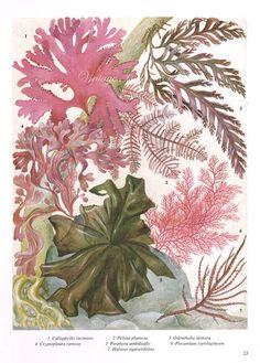 Vintage Algues Ocean Sea Print 1960s   DAWN collection inspiration   Au Revoir Les Filles