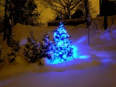 Blue LED Christmas lights in the snow.