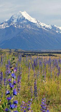 Mount Cook / Aoraki National Park   New Zealand