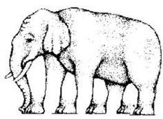 Bilderesultat for optical illusions for kids