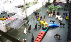 Dog day care that offers daily activities and pampering for the guest's pet