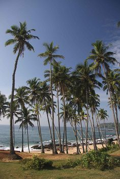 Tangalla Beach, Sri Lanka , our holiday spot growing up! Surf Trip, Beach Trip, Best Places To Travel, Places To Visit, Brunei, Travel Around The World, Around The Worlds, Maldives Destinations, Ceylon Sri Lanka