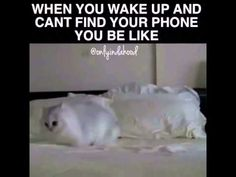 When you wake up and can't find your phone #funny #video I just can't...stop...laughing!!!...
