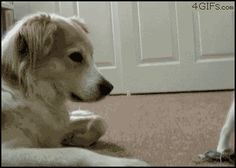 Cat boop - Cat humor