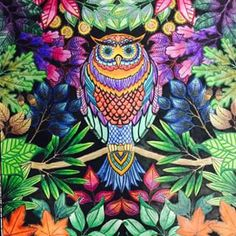 Acabei!!!! #jardimsecreto #colorful #colorindo #pintando #fds #aprendendo #color #colors #coruja #owl @jardimsecretoinst @jardimsecretoinspire @jardimsecreto_brasil @jardimfloresta @jardimsecretotop  - zakzukbr via Instagram