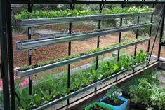 Garden Gutters - A fun way to grow vegetables.