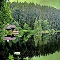A cabin on a secluded lake shore.