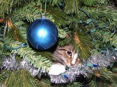 Festive felines: 11 cats in Christmas trees