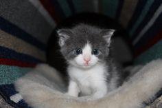 Adopting a Pet Kitty Cat