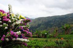 Flores, Colonia Tovar, Estado Aragua, Venezuela.