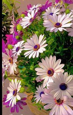Container Gardening Flowers Shade - New ideas Exotic Flowers, Flowers Nature, Amazing Flowers, Pretty Flowers, Wild Flowers, Daisy, Beautiful Flowers Wallpapers, Flower Quotes, Flower Wallpaper