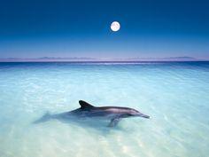 Fond d'écran hd : animal dauphin